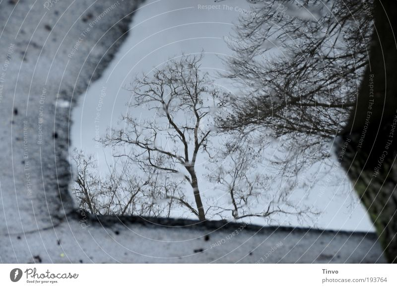 backyard puddle Environment Nature Water Autumn Winter Climate Bad weather Tree Dark Cold Sadness Transience Puddle Asphalt Ground Twigs and branches Sky