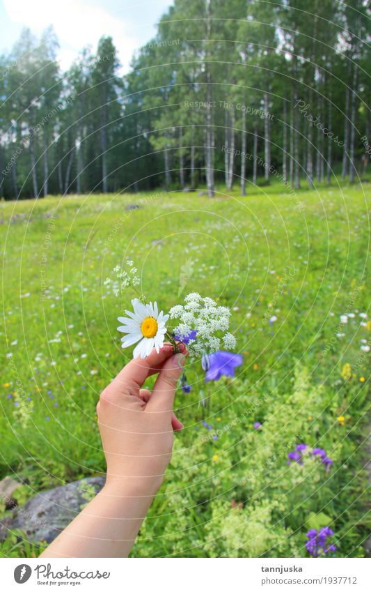 Hand with wildflowers of Finland, North Karelia Human being Woman Sky Nature Youth (Young adults) Plant Blue Summer Green Beautiful Tree Landscape Flower Leaf