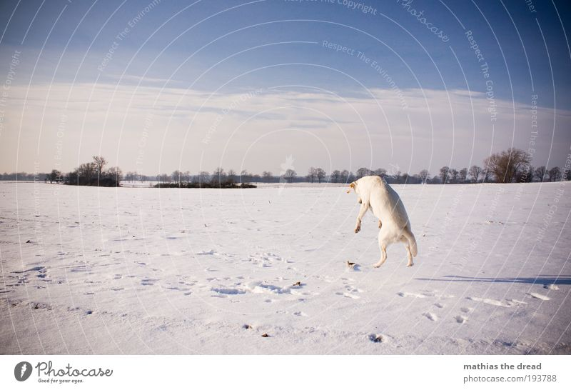 Nature Sky Tree Sun Plant Winter Clouds Animal Cold Snow Meadow Jump Playing Movement Dog Landscape