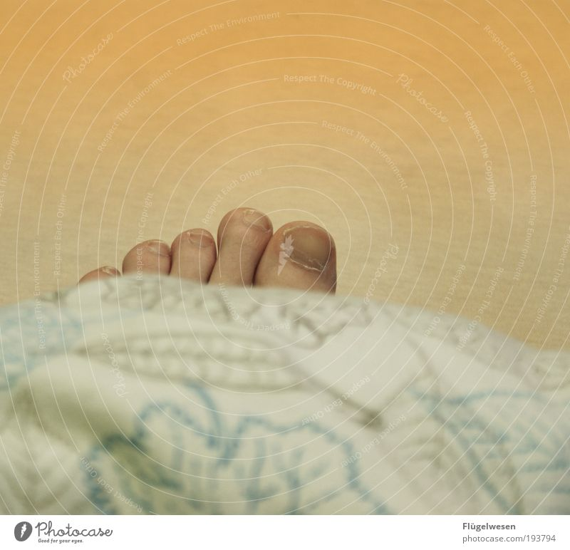 Death came overnight Well-being Feet Lie Sleep Safety (feeling of) late riser Bed Duvet Colour photo Interior shot Copy Space top Toenail Tip of the toe