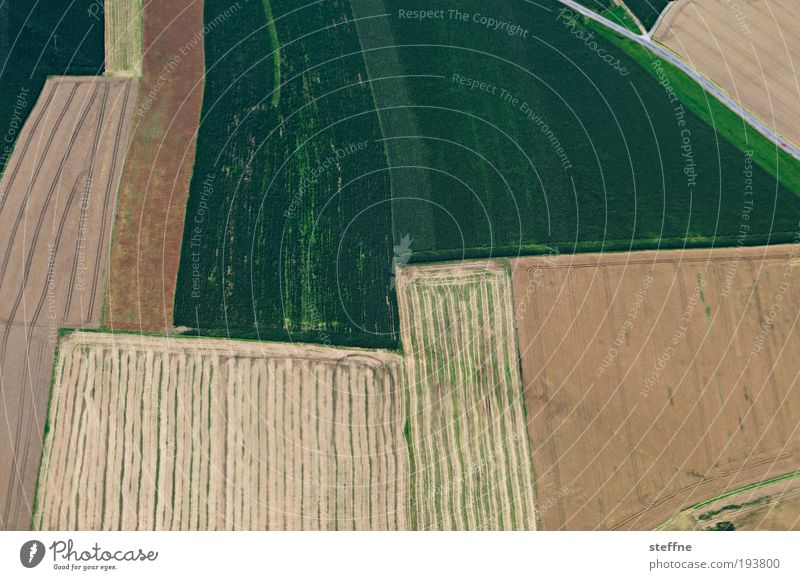 Meadow Line Field Esthetic Agriculture Abstract View from the airplane