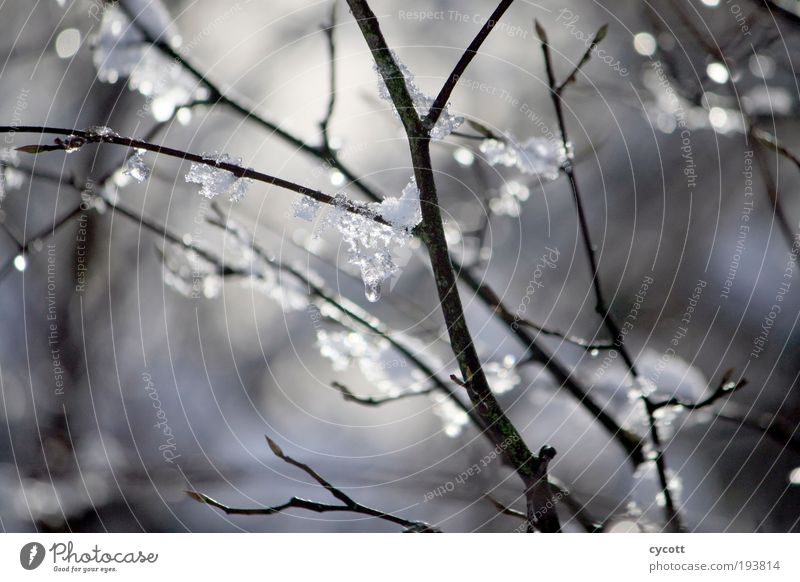 Nature Tree Winter Animal Cold Ice Glittering Weather Frost Branch Freeze