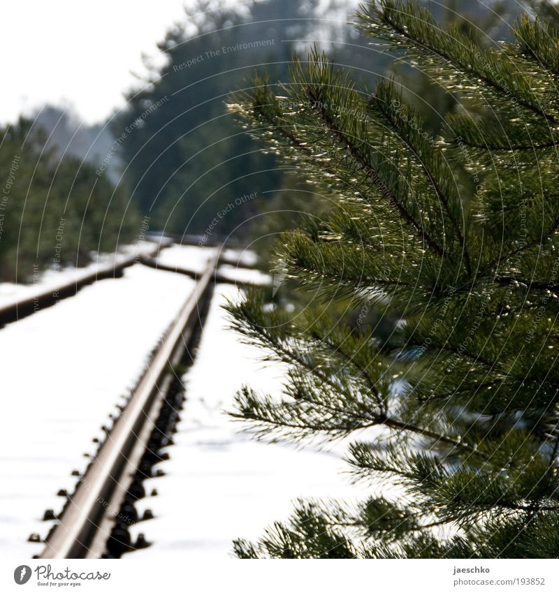 Nature Tree Winter Calm Forest Snow Environment Lanes & trails Railroad Climate Perspective Future Bushes Hope Pure Curiosity