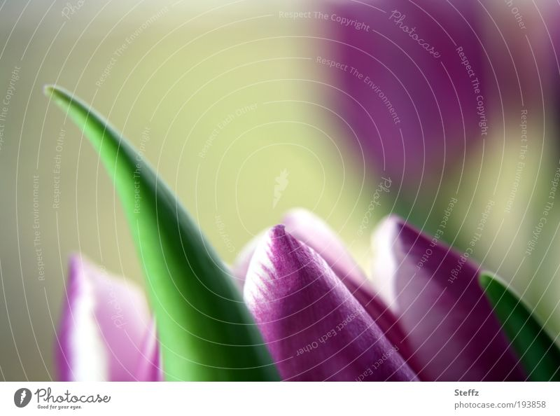 Nature Plant Beautiful White Flower Blossom Spring Natural Elegant Beginning Point Romance Soft Seasons Card Violet