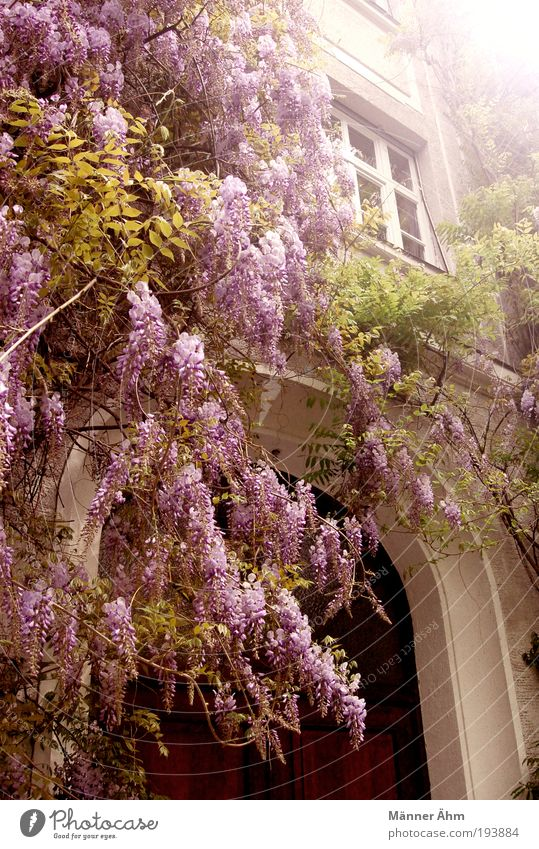 White Green Plant Flower House (Residential Structure) Window Wall (building) Gray Blossom Building Wall (barrier) Brown Door Facade Violet Munich