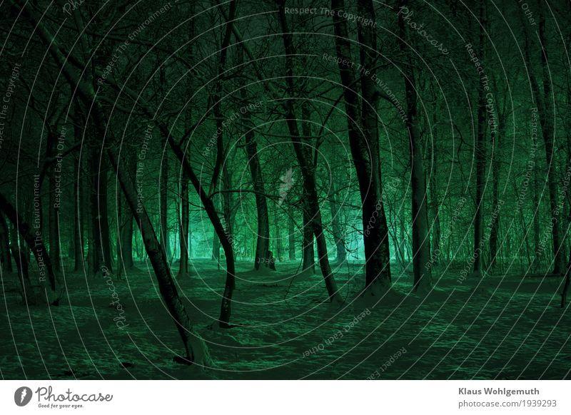 Nature Blue Tree Loneliness Winter Forest Black Cold Snow Illuminate Park Fear Threat Romance Creepy Freeze