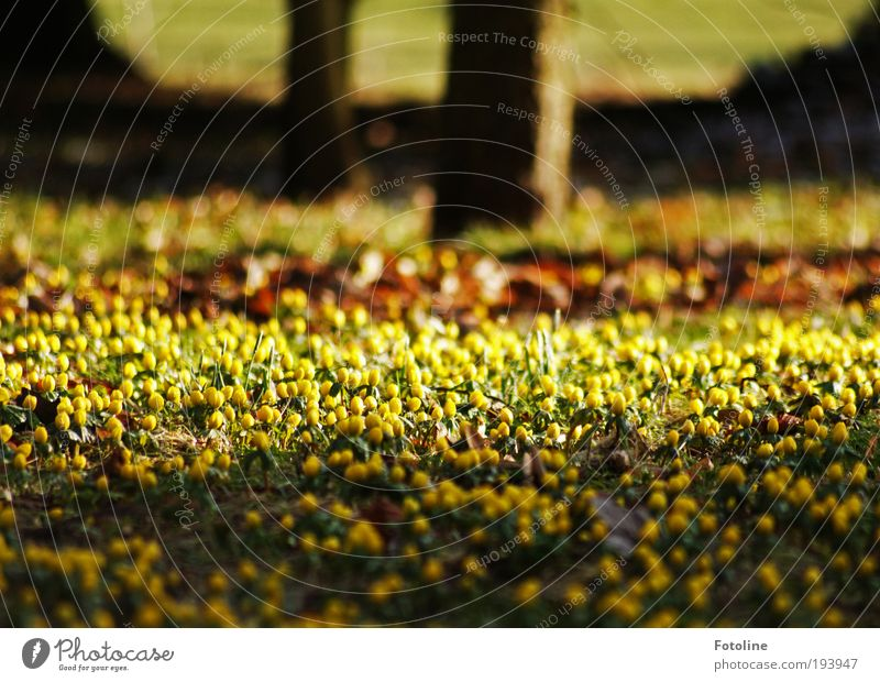 Nature Tree Flower Plant Leaf Yellow Meadow Blossom Spring Garden Park Landscape Bright Weather Environment Earth
