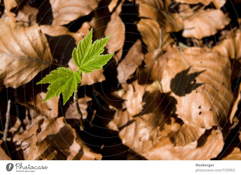 Nature Green Tree Plant Leaf Calm Environment Autumn Spring Wood Brown Energy Success Growth New Change