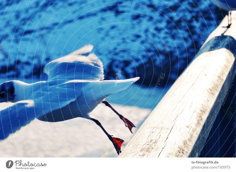 White Blue Joy Winter Vacation & Travel Animal Snow Jump Movement Wood Happy Ice Bird Funny Animal foot Flying