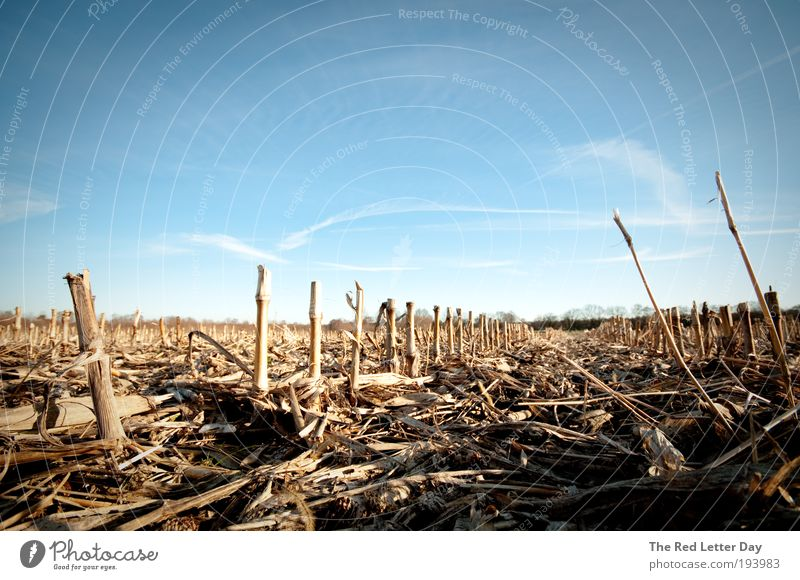 Nature Landscape Field Environment Earth Harvest Wheat Agriculture Wheatfield
