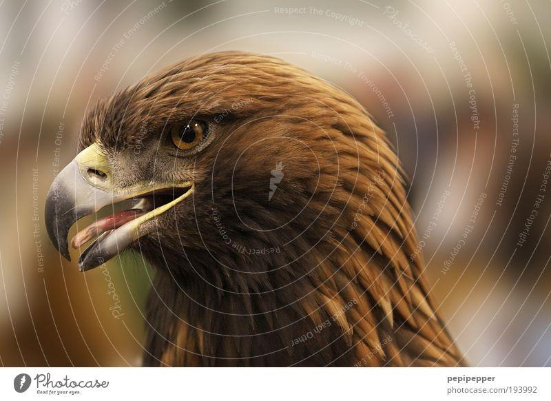 Nature Animal Yellow Brown Bird Wild animal Fly Esthetic Cool (slang) Threat Hunting Bird's-eye view Aggression Feeding