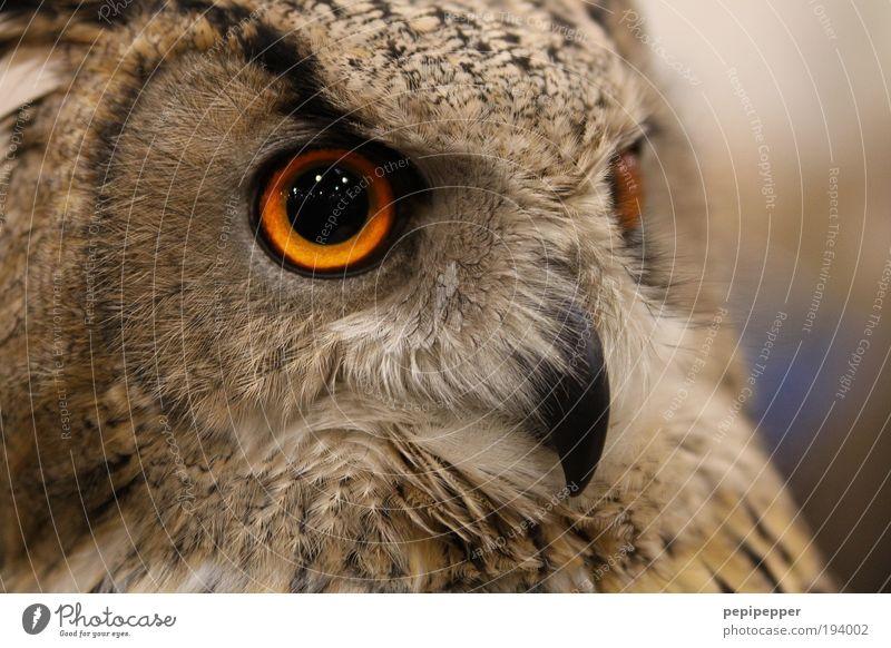 Nature Animal Landscape Dark Eyes Bird Brown Wild animal Large Esthetic Wing Cool (slang) Threat Animal face Zoo Moon