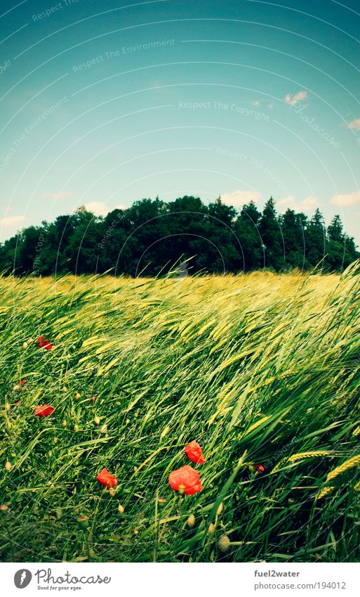 Nature Flower Green Red Summer Vacation & Travel Animal Meadow Grass Landscape Moody Field Happiness Hot Infinity Fragrance