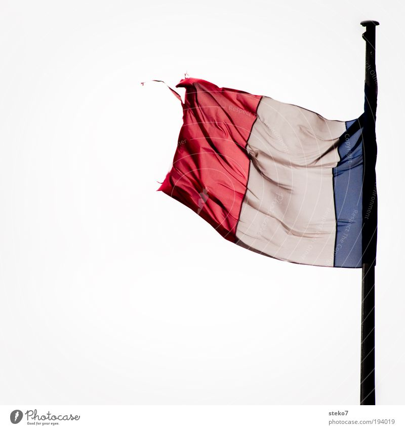 Wind Flag Gale Paris France Crisis Judder Human being Isolated Image Loyal French High spirits Blown away Abrasion Worn out Tricolor