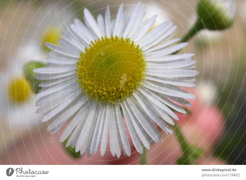 White Flower Yellow Near
