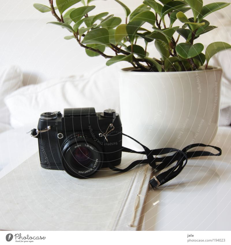 White Green Plant Black Wood Bright Room Photography Book Table Esthetic Camera Sofa Analog Furniture Living room