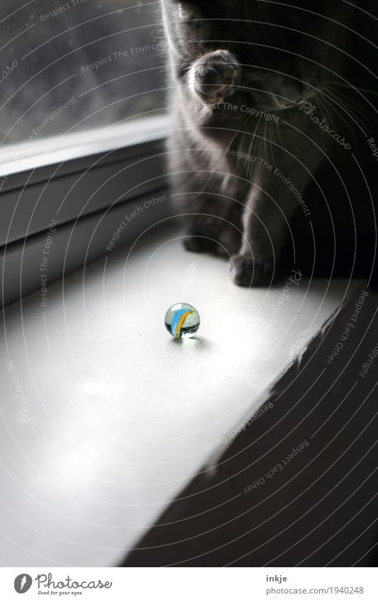 the marble Leisure and hobbies Playing Window Window board Pet Cat 1 Animal Marble Glass ball Round Disinterest Cleaning Ignore Colour photo Interior shot