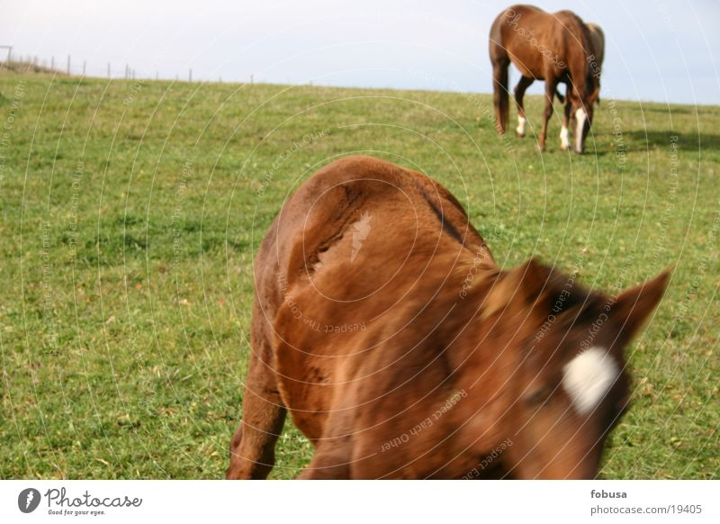 Meadow Grass Horse Pasture Mold