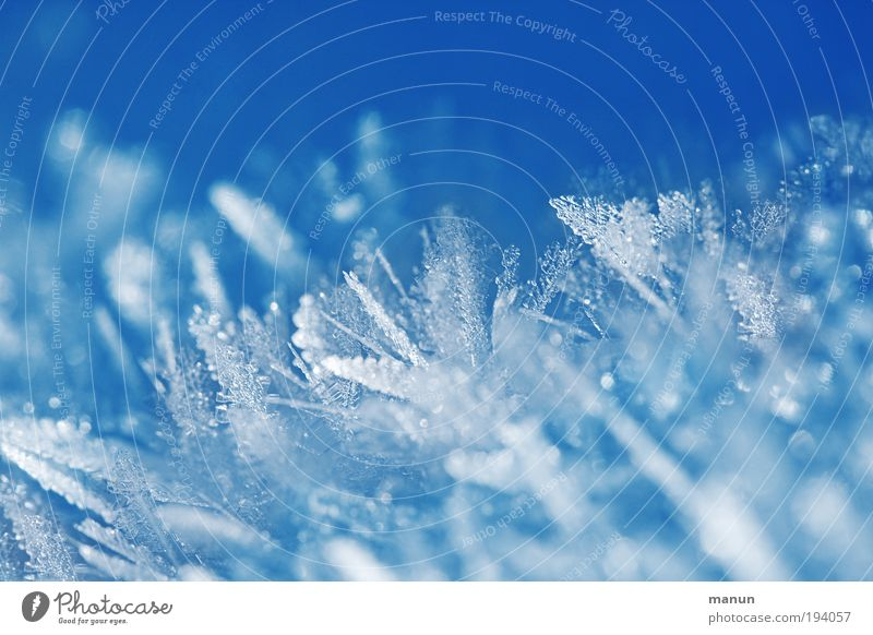 Feathered Design Relaxation Calm Winter vacation Baptism Nature Water Ice Frost Snow Cool (slang) Sharp-edged Fantastic Fresh Cold Thorny Blue White Beautiful