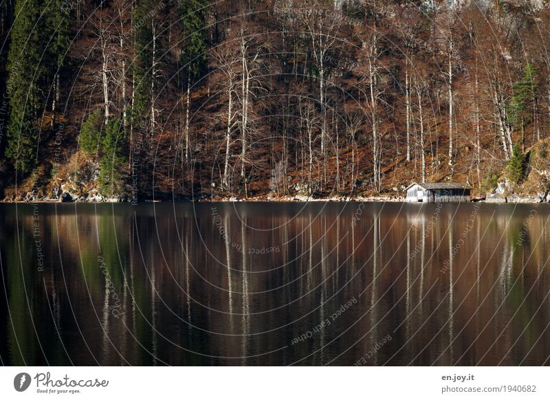 still bare Vacation & Travel Adventure Nature Landscape Autumn Forest Lakeside Hut Boathouse Brown Loneliness Relaxation Leisure and hobbies Idyll Calm Grief