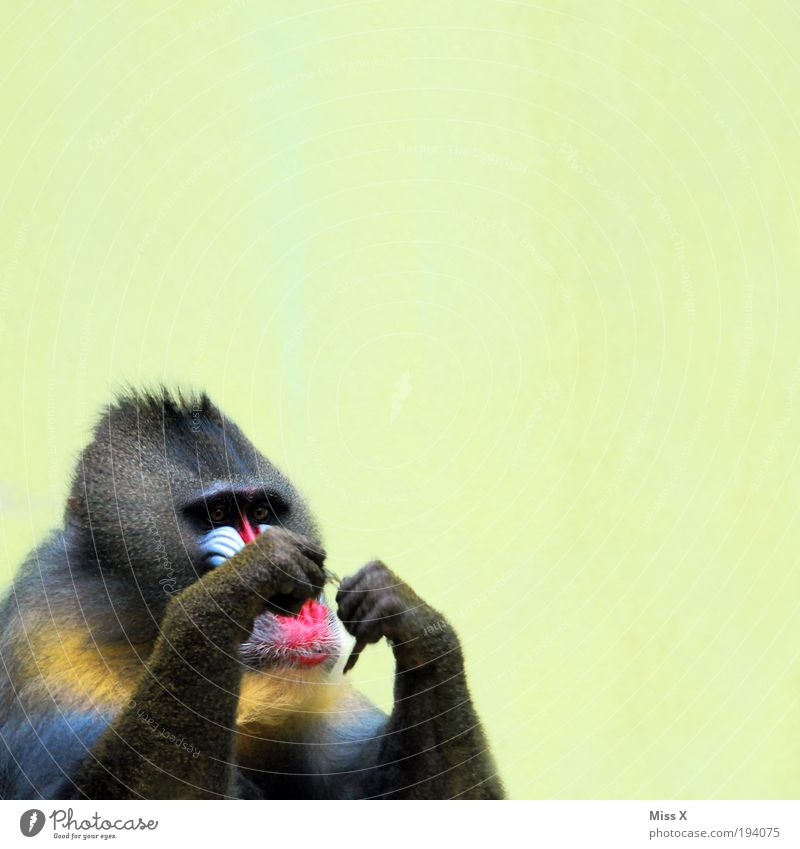 Animal Funny Wild animal Hair Concentrate Virgin forest Monkeys Handicraft Human being Baboon