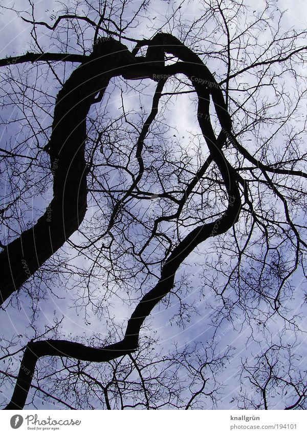 bizarre Nature Plant Sky Clouds Winter Tree Dark Blue Black White Bizarre Whimsical Colour photo Subdued colour Exterior shot Deserted Day