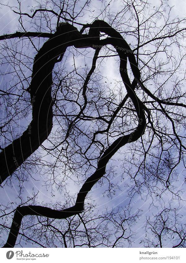 Nature Sky White Tree Blue Plant Winter Black Clouds Dark Whimsical Bizarre