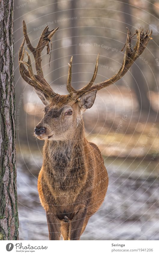 Plant Tree Animal Forest Wild animal Observe Pelt Animal face Zoo Antlers Deer Red deer