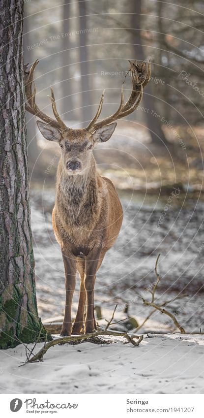 Another red deer Plant Animal Meadow Field Forest Wild animal Animal face Pelt Zoo 1 To feed Looking Red deer Antlers Colour photo Multicoloured Exterior shot