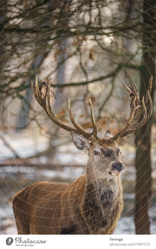 Skeptical view Nature Plant Animal Forest Wild animal Animal face Pelt Zoo 1 Movement To feed Feeding Deer Red deer Antlers Colour photo Multicoloured