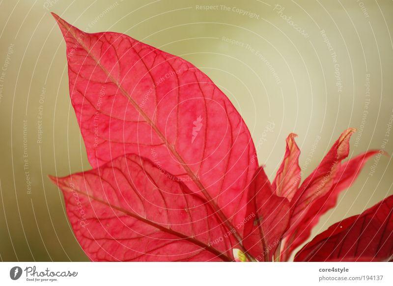 Beautiful Flower Green Plant Red Leaf Blossom Fantastic Exotic Pot plant