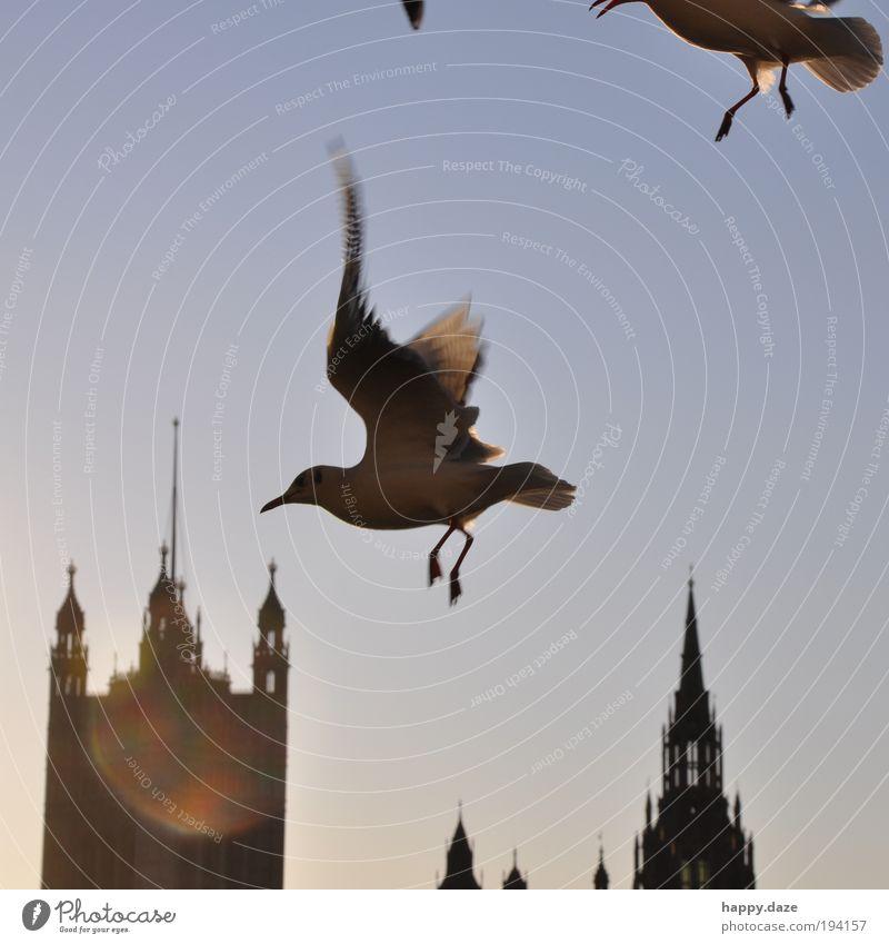 Sky Blue Animal Movement Freedom Happy Contentment Power Bird Elegant Flying Speed Perspective Hope Esthetic
