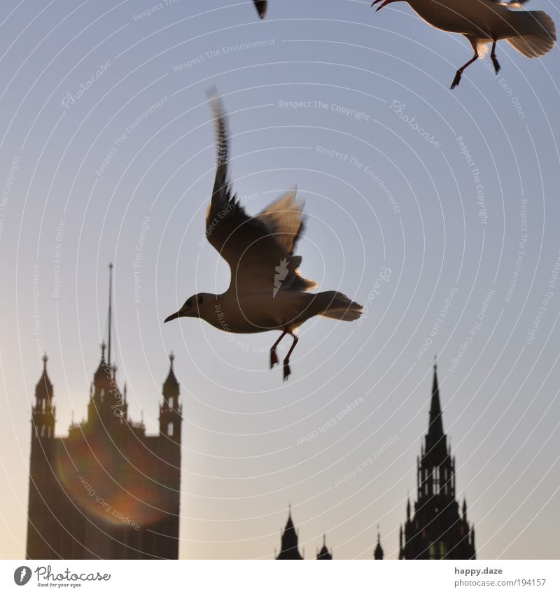 zestfully Sky Sunlight Animal Bird Movement Flying Esthetic Elegant Free Infinity Speed Blue Joie de vivre (Vitality) Power Contentment Resolve Advancement