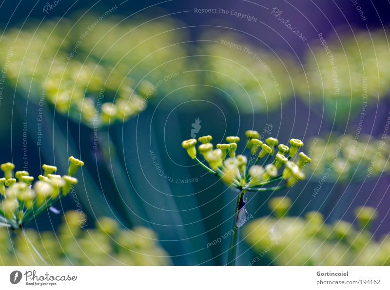 Nature Beautiful Flower Green Plant Summer Yellow Blossom Spring Environment Fresh Star (Symbol) Growth Violet Decoration Agriculture