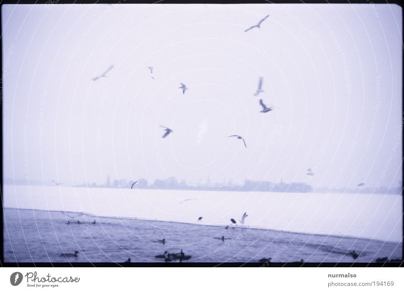 Nature Winter Calm Landscape Ice Bird Coast Fog Environment Flying Esthetic Frost Tourism River Authentic Leisure and hobbies