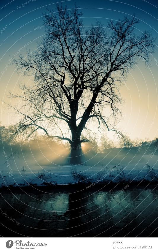 Nature Tree Blue Winter Calm Yellow Cold Snow Relaxation Park Landscape Fog Weather Idyll Lakeside River bank