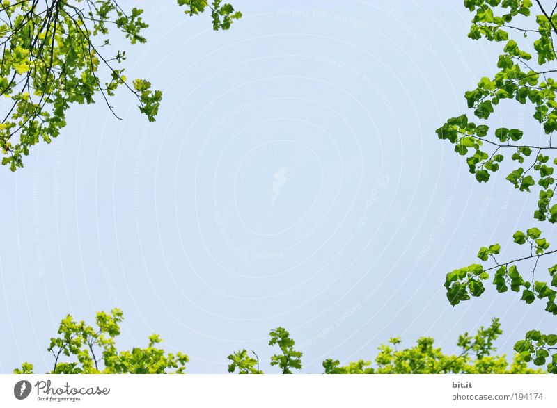 Nature Sky Tree Summer Calm Leaf Spring Freedom Air Background picture Design Environment Horizon Perspective Corner Romance