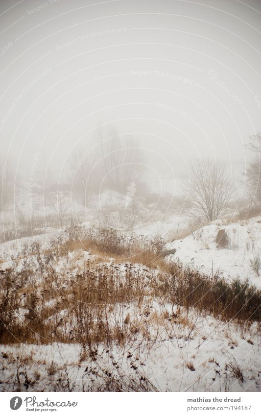 Nature Tree Plant Winter Clouds Forest Dark Cold Snow Meadow Style Sadness Ice Field Fog Environment