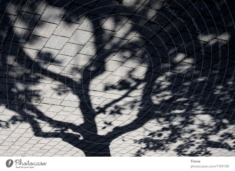 Tree Black Street Dark Gray Lanes & trails Perspective Places Uniqueness Exceptional Abstract Sidewalk Plant Beautiful weather Pavement