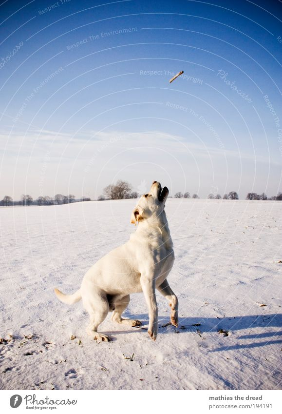 Dog Sky Nature Tree Plant Winter Animal Clouds Environment Landscape Meadow Snow Playing Movement Jump Horizon