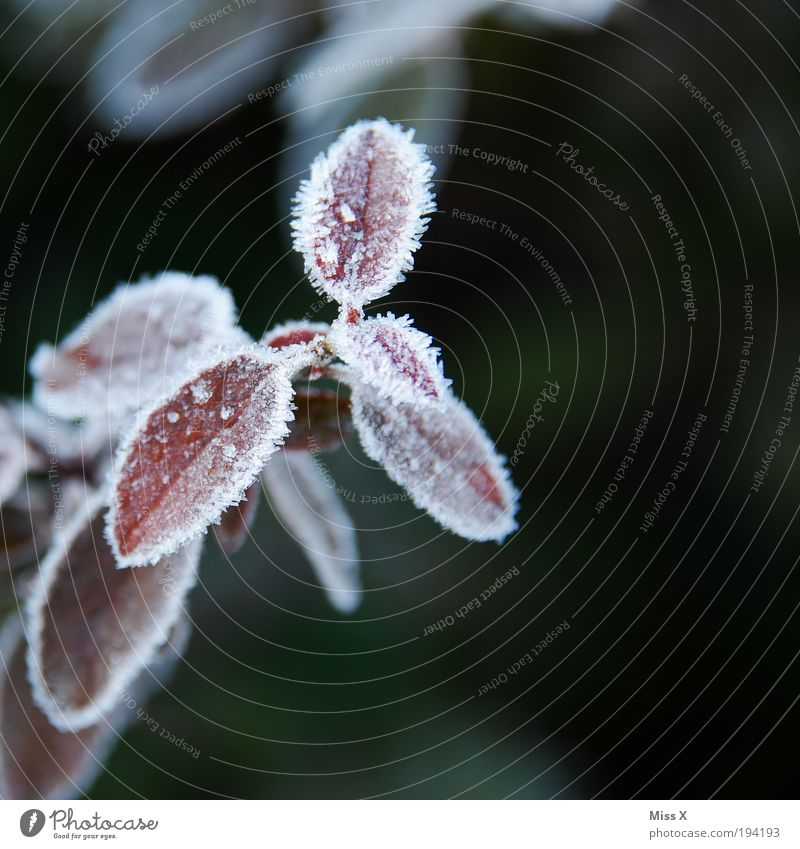 Plant Leaf Winter Cold Autumn Spring Park Ice Weather Climate Drops of water Frost Branch Hoar frost Macro (Extreme close-up)