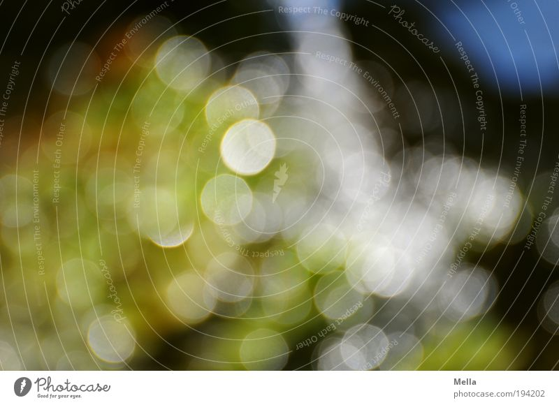 Spring with -7 Dioptrine Water Point Circle Glittering Illuminate Dream Fresh Green background Abstract Blur Colour photo Multicoloured Exterior shot Close-up