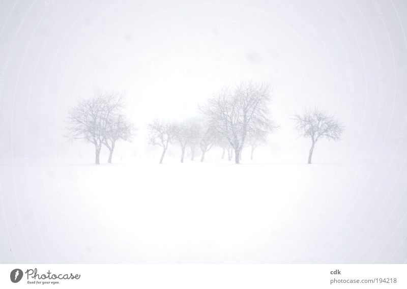grey in grey Environment Nature Landscape Winter Climate Bad weather Fog Snow Snowfall Tree Park Meadow Field Esthetic Loneliness Apocalyptic sentiment Cold