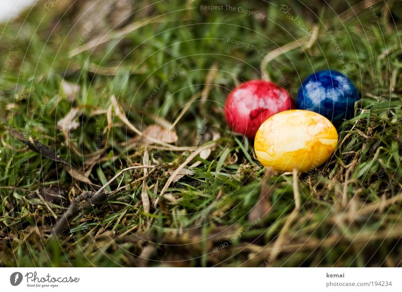 Easter eggs Food Egg Eggshell Nutrition Environment Nature Plant Earth Spring Grass Leaf Foliage plant Easter egg nest Blue Yellow Green Red 3 Colour photo