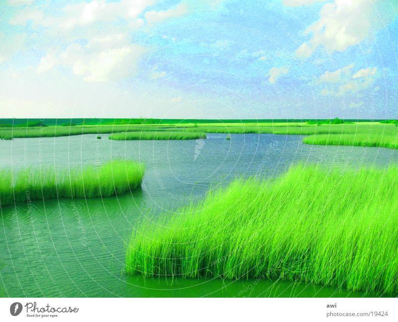 Water Ocean Lake Common Reed Dike Habitat