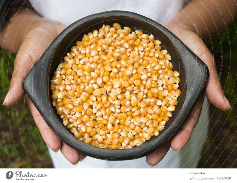 hands holding a bowl with maize Vegetable Nutrition Vegetarian diet Diet Hand Fingers Group Nature Plant Natural Yellow Gold Tradition Maize Farm Harvest Oats