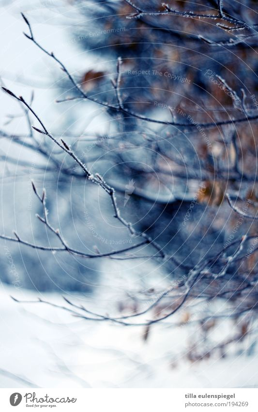 Nature Blue Plant Winter Leaf Loneliness Colour Dark Cold Snow Environment Trip Bushes Climate Wild