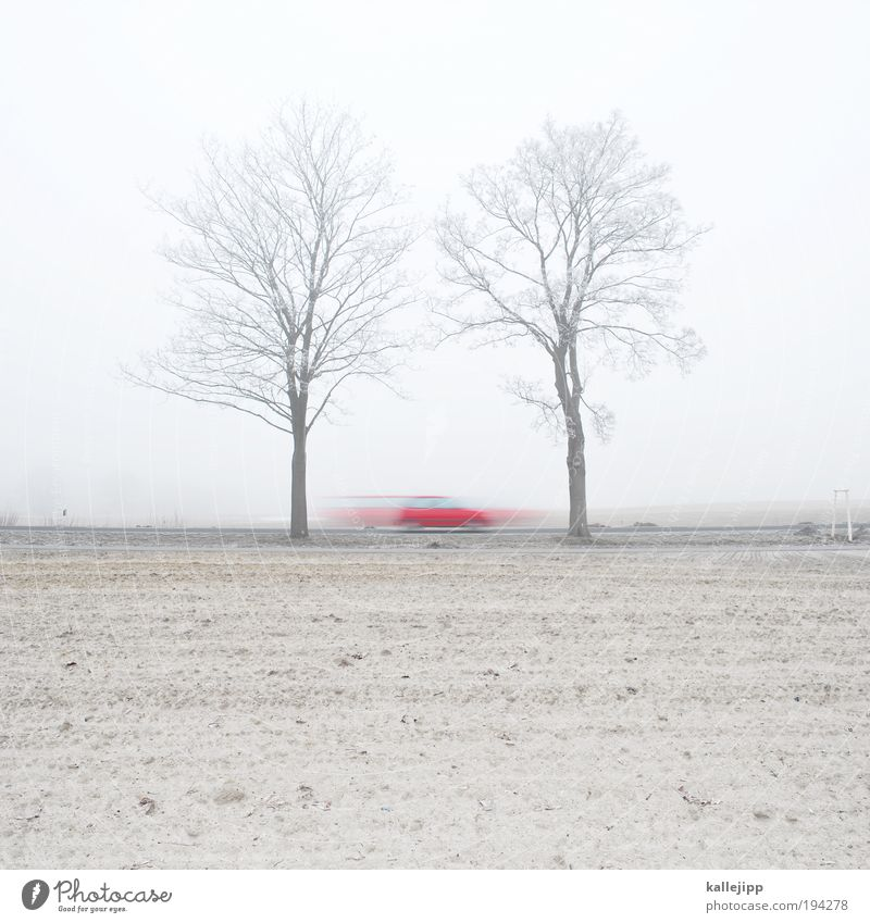 Tree Plant Red Winter Street Lanes & trails Car Sand Landscape Field Road traffic Fog Environment Transport Earth Speed