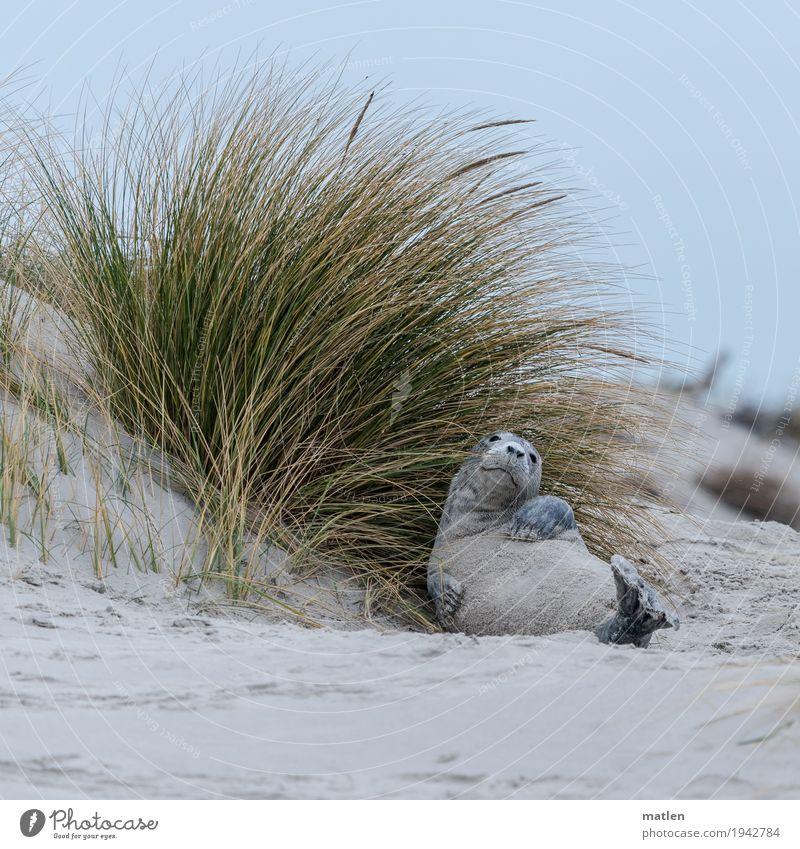 Blue Green Landscape Ocean Animal Calm Winter Beach Yellow Gray Lie Cool (slang) Animal face Paw Harbour seal