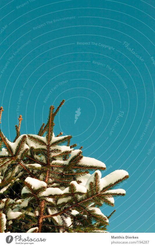 Nature Green Tree Plant Winter Landscape Snow Glittering Thin Gigantic Foliage plant Wild plant